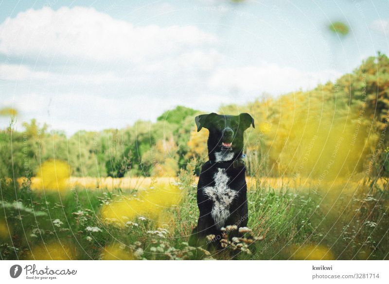 Dog on meadow I Nature Landscape Plant Sky Clouds Spring Summer Autumn Beautiful weather Flower Grass Bushes Leaf Blossom Foliage plant Agricultural crop