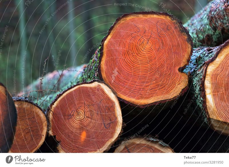 Nature Plant Landscape Tree Animal Wood Environment Esthetic Pelt Wooden board