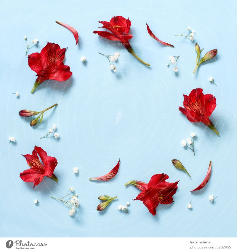 Red flowers on a light blue background Woman Blue White Flower Adults Copy Space Above Design Decoration Birthday Creativity Wedding Mother Blossom leave