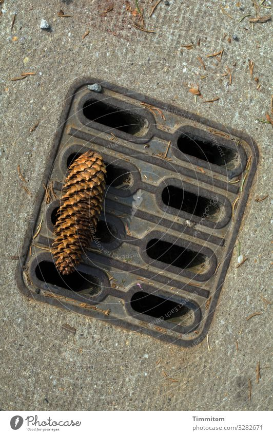Where love falls Concrete Wood Metal Wait Simple Brown Gray Black Emotions Love Drainage Spruce cone Colour photo Exterior shot Deserted Day