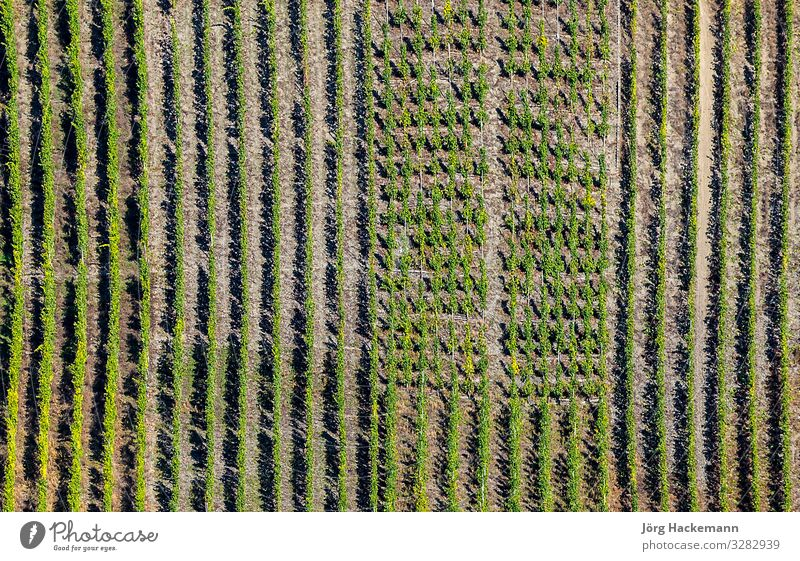 green vineyards at the river Moselle Vacation & Travel Summer Sun Nature Landscape Plant Leaf Green Beauty Photography Europe European famous fields german