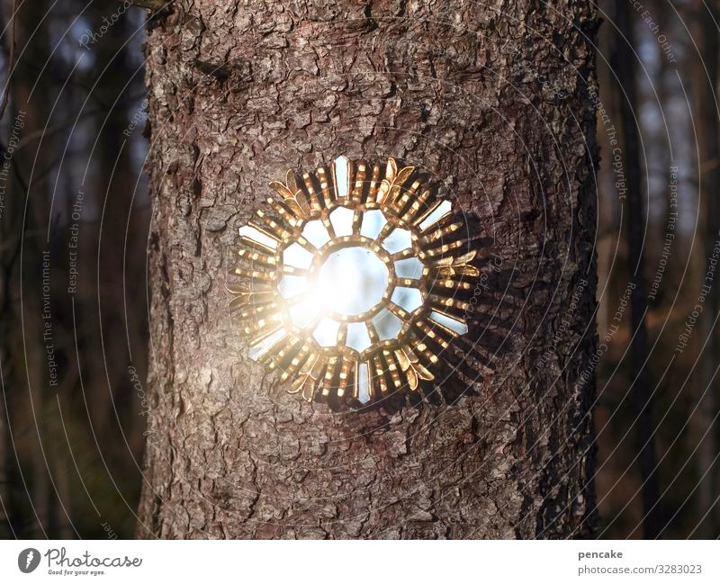fairy tale mirror Elegant Design Happy Mirror Culture Nature Elements Sunlight Winter Tree Forest Energy Discover Mysterious Kitsch Art Luxury Might Nostalgia