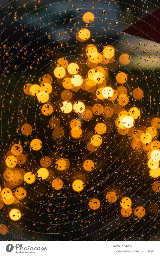 Christmas tree in the rain Night life Event Feasts & Celebrations Christmas & Advent Tree Sign Observe Illuminate Looking Glittering Happy Gold Drops of water