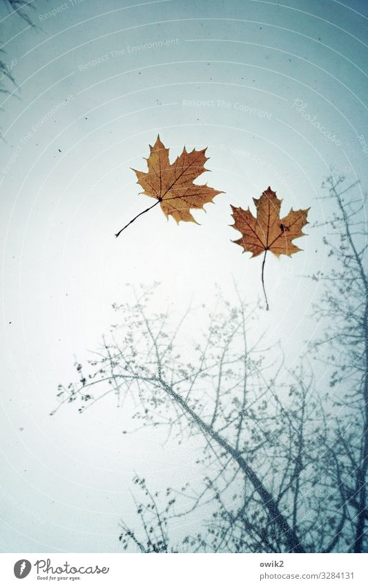 Sky Nature Plant Leaf Autumn Environment Together Rain Car Weather Glass Transience Wet Maple leaf Maple tree Car roof