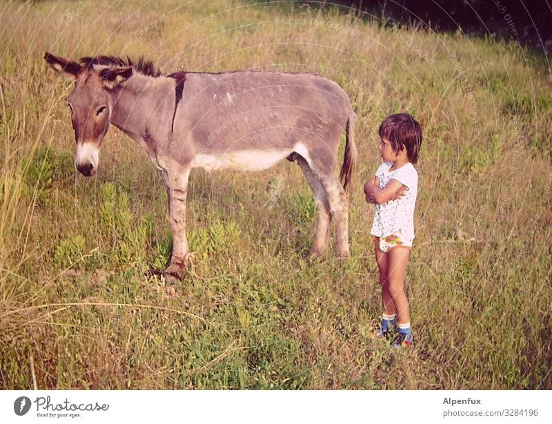 Stubbornness WM75 - Final ! Masculine Child 1 Human being 3 - 8 years Infancy Animal Farm animal Donkey Observe Communicate Looking Success Power Willpower