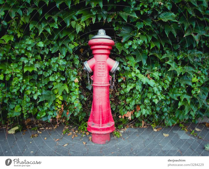 Red meets green Design Harmonious Summer Fire hydrant Environment Beautiful weather Foliage plant Street Bavaria Germany Outskirts Metal Observe Discover