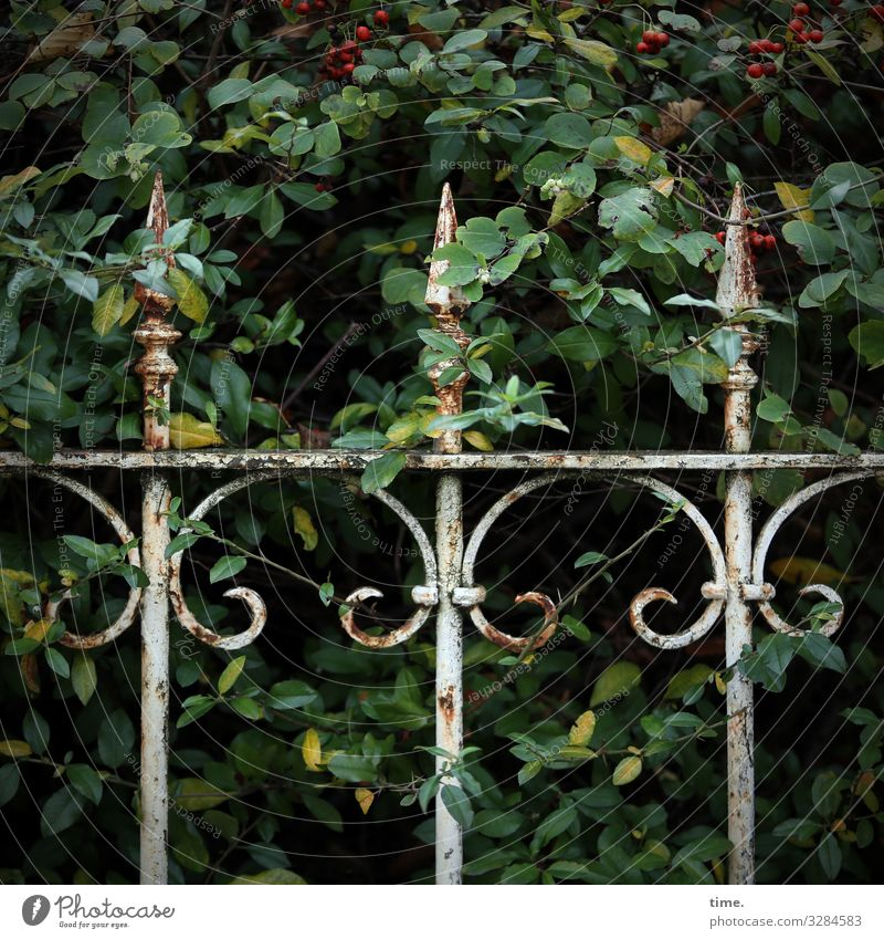 Tales from the fence (62) | UT HH 10.19 Craft (trade) Plant bushes Decoration Fence Rust Metal Line Old conceit Elegant Safety Protection Romance Patient