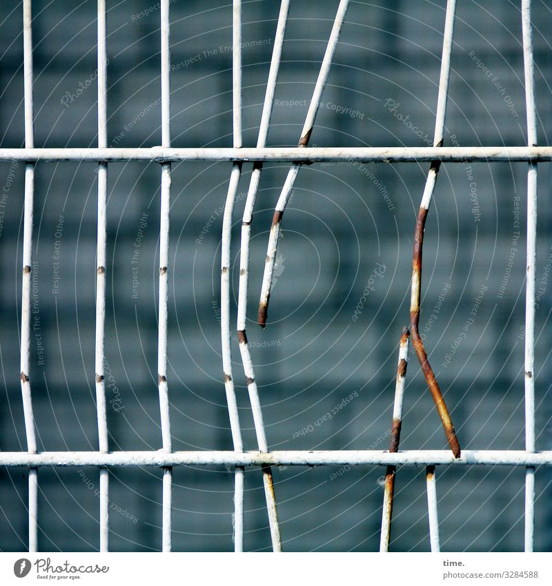 Stories from the fence (63) Wall (barrier) Wall (building) Fence Grating Metal Rust Line Sharp-edged Hideous Broken Rebellious Point Thorny Trashy Town Fatigue