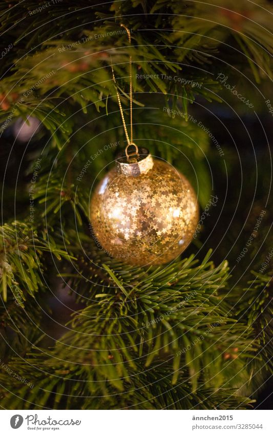 A golden Christmas tree ball with stars hangs from a green fir branch Gold Glittering Jewellery Season Firm celebrations December christmas eve advent season