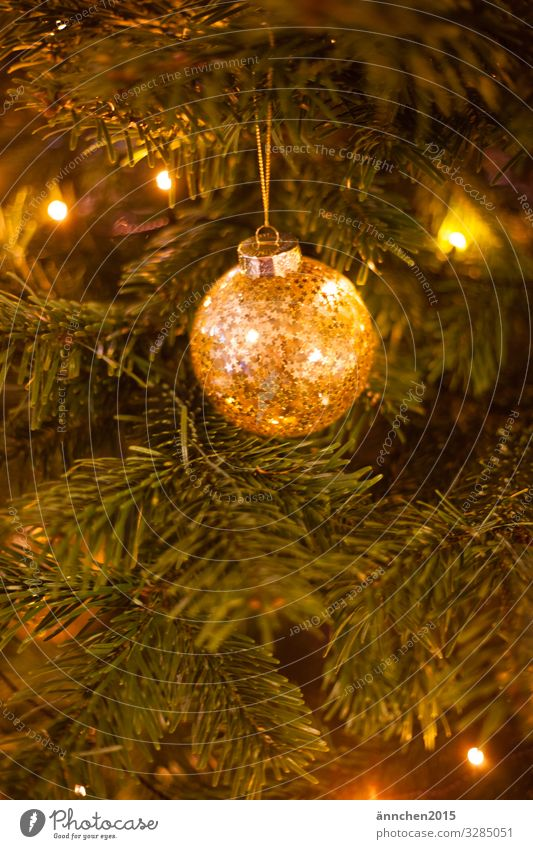 Gold glittering christmas tree ball hanging from a fir tree branch Christmas Firm Seasons Winter Christmas & Advent Decoration Public Holiday