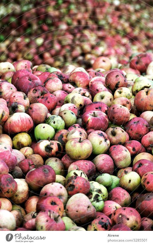 Eat more fruit! Fruit Apple Organic produce Vegetarian diet Diet Fragrance Many Green Red Speckled Natural Harvest Apple harvest Wine press Heap Juicy