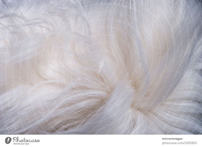furry white shaggy backdrop texture Wallpaper Animal Pelt Beautiful Modern Wild Soft White Consistency Hairy background Detail abstract carpet clean closeup