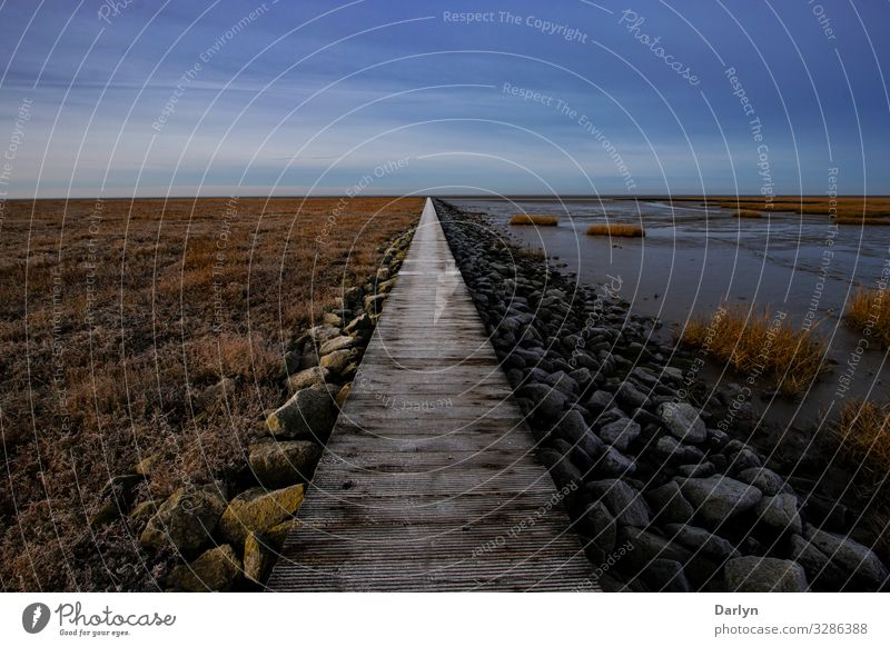 long way Environment Nature Landscape Plant Animal Elements Sand Water Sky Cloudless sky Clouds Horizon Sun Sunlight Winter Climate Weather Beautiful weather