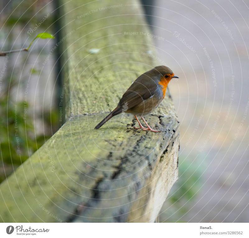 Red Animal Wood Bird Flying Cute Feeding