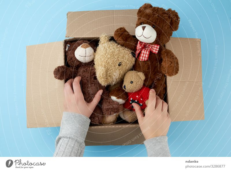 cardboard box with various teddy bears Child Baby Woman Adults Infancy Hand Group Animal Container Toys Doll Teddy bear Collection Small Cute Retro Soft Blue