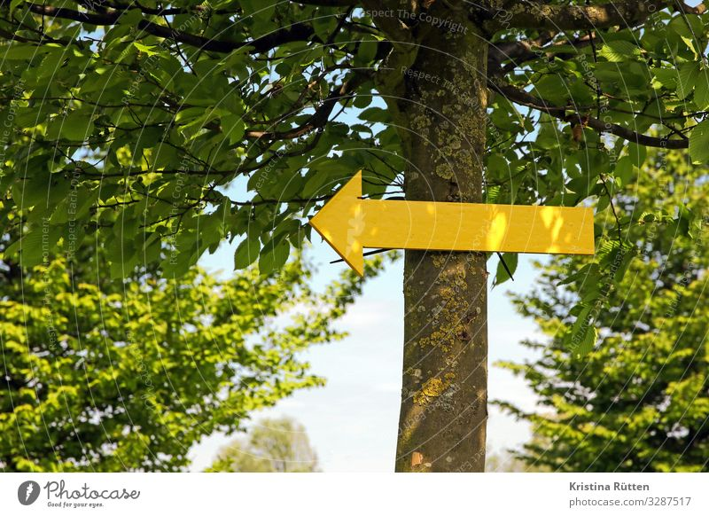 that way Hiking Nature Tree Park Forest Lanes & trails Sign Arrow Yellow Target Direction Road marking Orientation Clue Footpath hiking route Paperchase