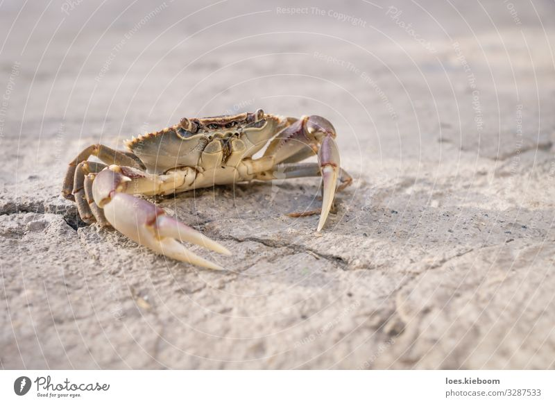 Posing lake crab Life Vacation & Travel Far-off places Summer Nature Sand Lake Animal Animal face Shellfish 1 Yellow Wanderlust wildlife Background picture