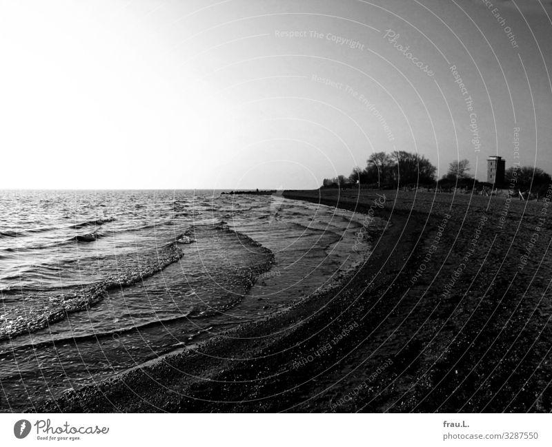 Landscape Tree Ocean Winter Beach Dark Coast Trip Waves High-rise Cloudless sky Health Spa