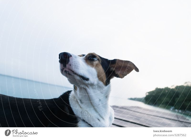 Dog posing like a model at a lake pier Style Vacation & Travel Summer Nature Lake Animal Animal face 1 Famousness Cool (slang) Elegant Uniqueness Beautiful