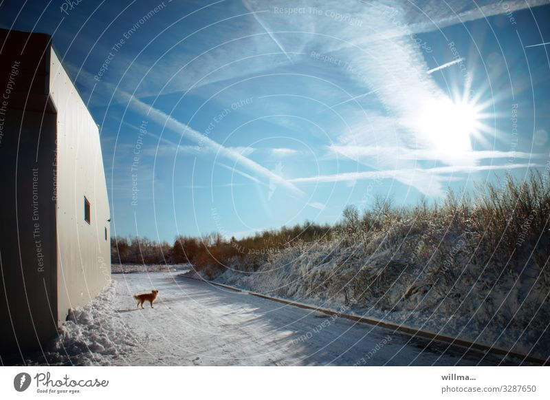 Sunny winter landscape with dog and house wall Landscape Sky Winter Beautiful weather Snow Building House (Residential Structure) Wall (building) Dog Cold