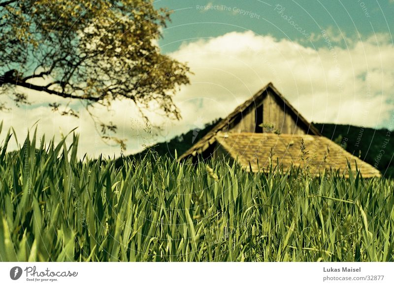 (-été-) Summer Grass Tree Clouds House (Residential Structure) Barn Field Sky