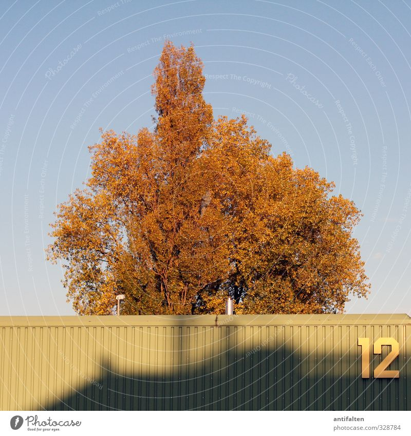 12 Nature Summer Autumn Tree Leaf Outskirts Building Warehouse Metal Digits and numbers Hang Esthetic Blue Brown Yellow Green Contentment Logistics Storage