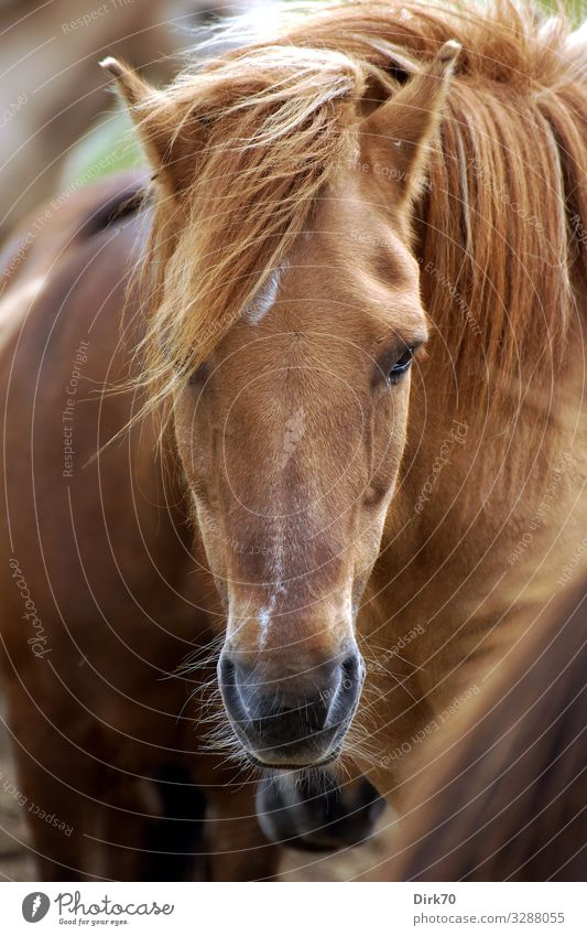 horse portrait Ride Equestrian sports Nature Air Sunlight Summer Beautiful weather Wind Pasture Denmark Jutland Animal Pet Farm animal Horse Animal face Bangs