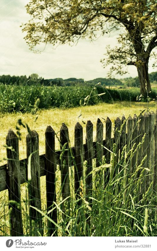 [jump] Spring Summer Field Fence Tree Grass Green Landscape Colour