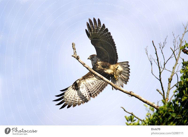 Sky Nature Tree Animal Forest Environment Spring Movement Freedom Bird Flying Elegant Wild animal Power Esthetic Beginning