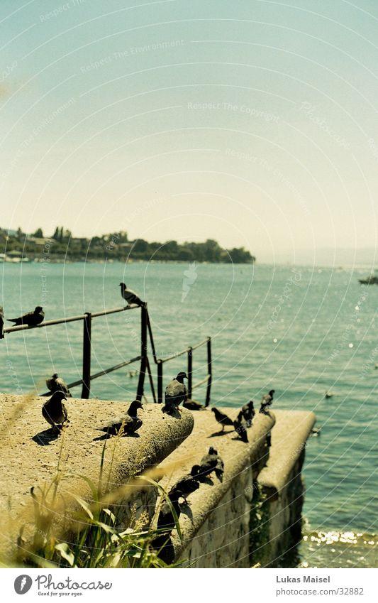 Summer Lake Warmth Landscape Bird Vantage point Physics Pigeon