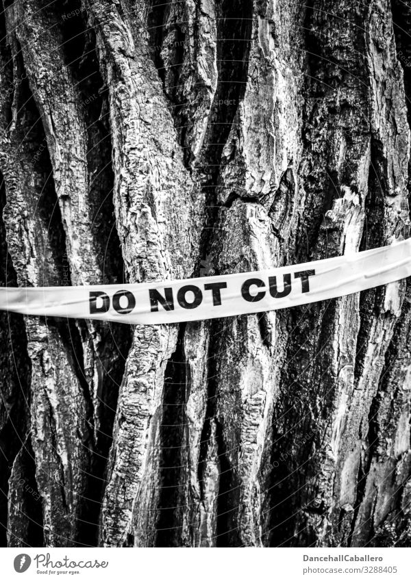 Do not cut down a log with lettering tree wood Plant Tree bark Tree trunk Logging Environment Forest Nature Responsibility Ignorant Protection Climate Change
