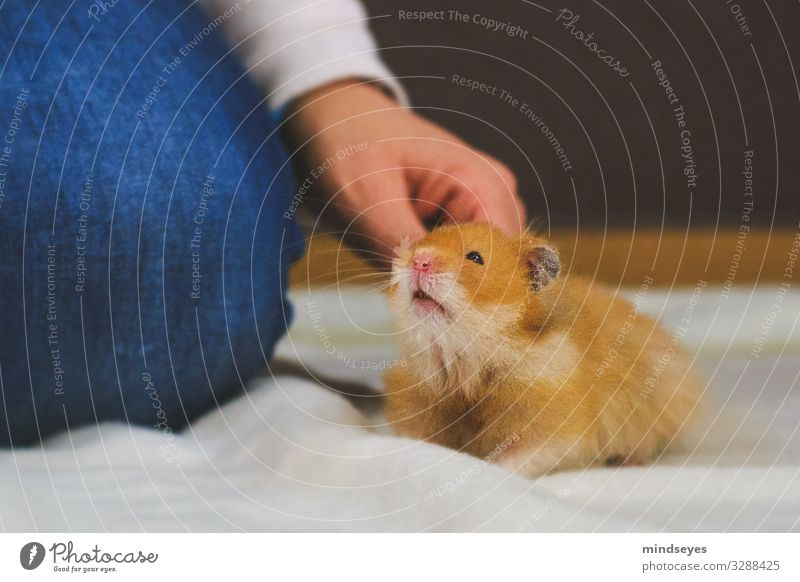 Crawl a hamster behind the ears Leisure and hobbies Flat (apartment) Arm Legs 1 Human being Jeans Pet Hamster Animal Touch To hold on Crouch Communicate
