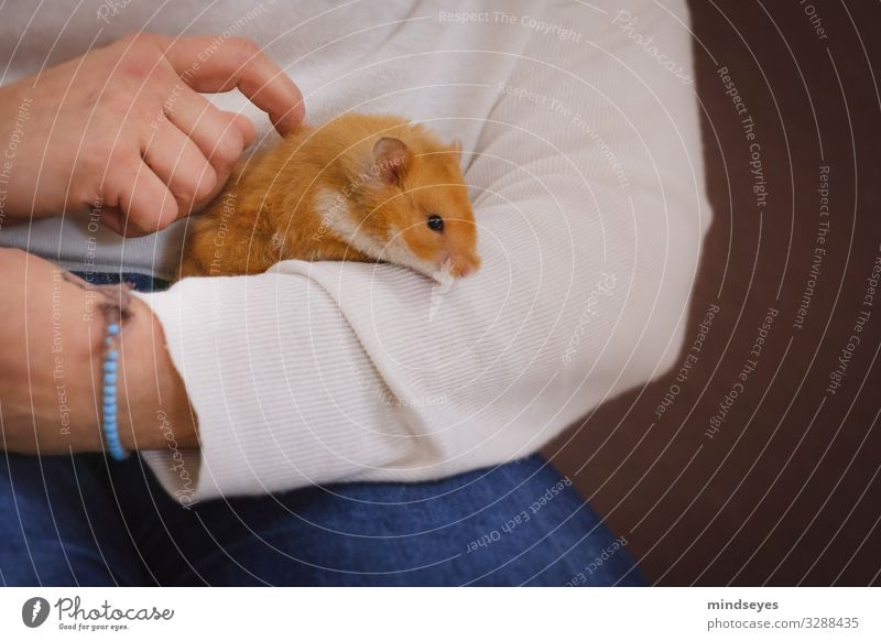 To take a hamster in your arms Leisure and hobbies Flat (apartment) Arm Hand 1 Human being Jeans Bracelet Pet Hamster Animal Observe Touch To hold on Playing