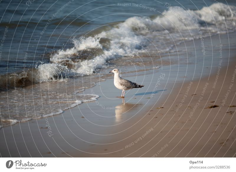 "seagull Environment Nature Landscape Water Sun Summer Beautiful weather Beach Ocean Island Animal Wild animal 1 Uniqueness ""Freedom North Sea Seagull Sylt"