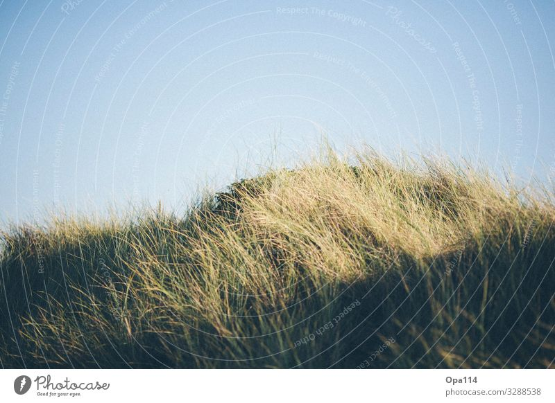dune Environment Nature Landscape Plant Animal Sky Sun Summer Autumn Weather Beautiful weather Agricultural crop Coast North Sea Ocean Island Hiking Happy Blue