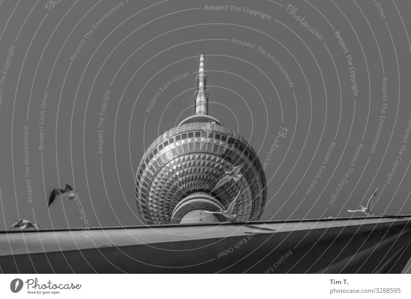 Berlin Alexanderplatz Town Capital city Downtown Deserted Manmade structures Building Architecture Television tower Animal Bird Pigeon Group of animals Flock