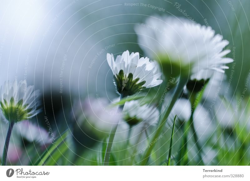 Sky Nature Green White Plant Life Blossom Pink Growth Daisy Blossom leave Flourish