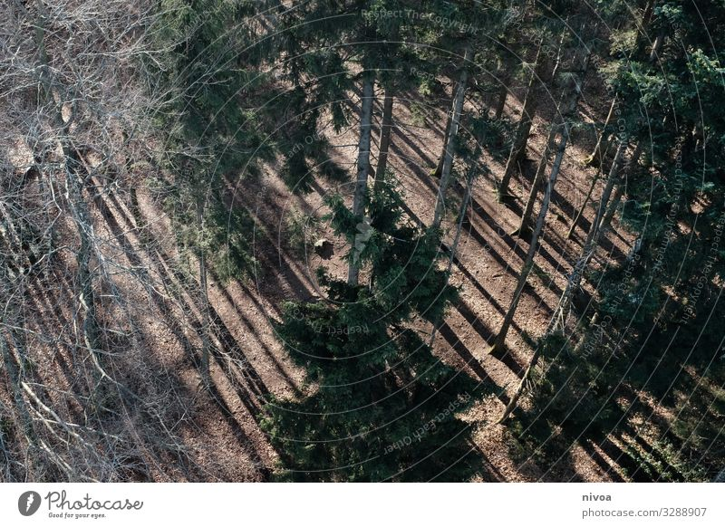 Coniferous forest from above Forest Coniferous trees Bird's-eye view Nature Colour photo Tree Exterior shot Deserted Landscape Environment Plant Light Day Green