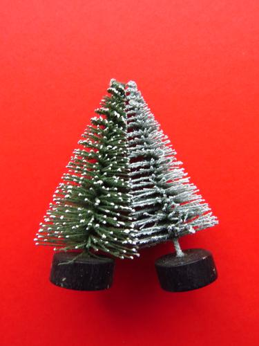 inseparable Plant Tree Christmas tree Decoration Decoration tree Touch Together Green Red White Emotions Contact Attachment Lean Tilt 2 Colour photo Studio shot
