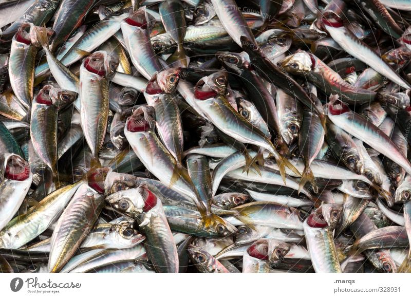 fish Food Fish Nutrition Organic produce Lie Many Market stall Lunch Fresh Animal Farm animal Fishery Heap Quality Wet Malodorous Farmer's market Gill