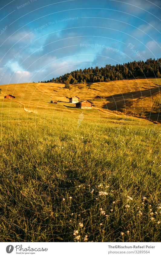 Nature Green Sun Clouds Forest Yellow Gold Italy Hut Dolomites Seiser Alm