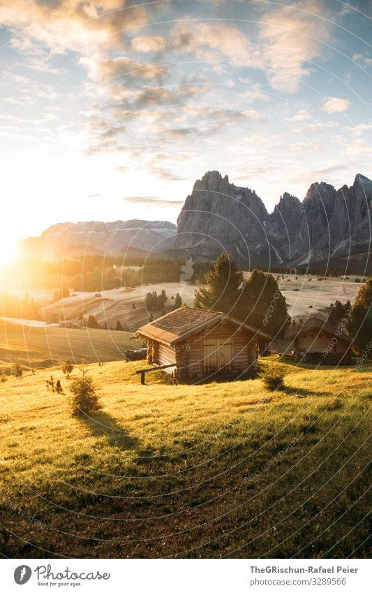 Alpe di Suisi - Alpe di Siusi Environment Nature Landscape Yellow Gold Green Seiser Alm alpe di suisi Hut Sunrise Mountain Clouds Back-light Shadow Light Tree