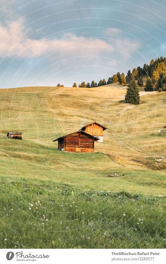 Nature Blue Green Landscape Clouds Forest Meadow Grass Pink Italy Alps Pasture Slope Alpine pasture South Tyrol Seiser Alm
