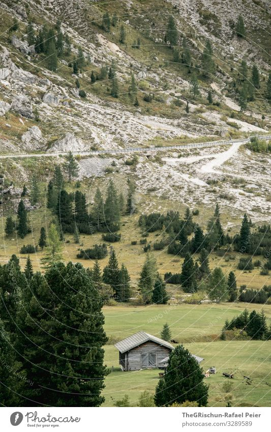 Alpine hut in the Dolomites House (Residential Structure) Alps pass road trees out Mountain Meadow Willow tree