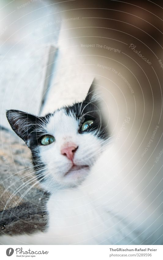 cat Animal Cat 1 Aggression Black White Domestic cat Paw Eyes Snout Ear Hairy Pelt Playing Defend not amused Exterior shot Copy Space right Copy Space bottom