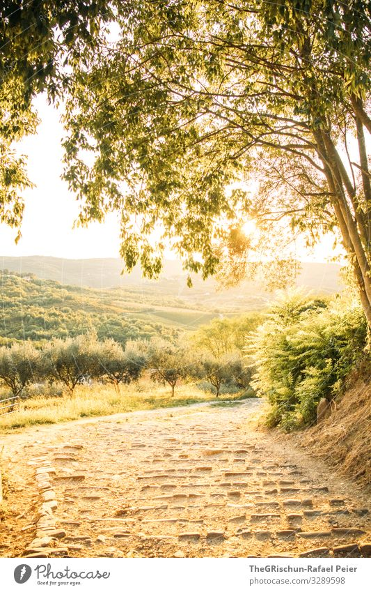 Croatia Nature Landscape Yellow Gold Sunset Lanes & trails Olive tree Stairs Travel photography Moody Tree Hill Colour photo Exterior shot Deserted