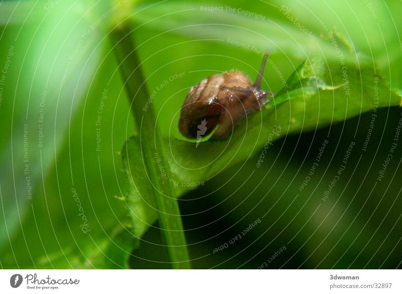The snake Leaf Green Snail shell Slowly House (Residential Structure) Macro (Extreme close-up)