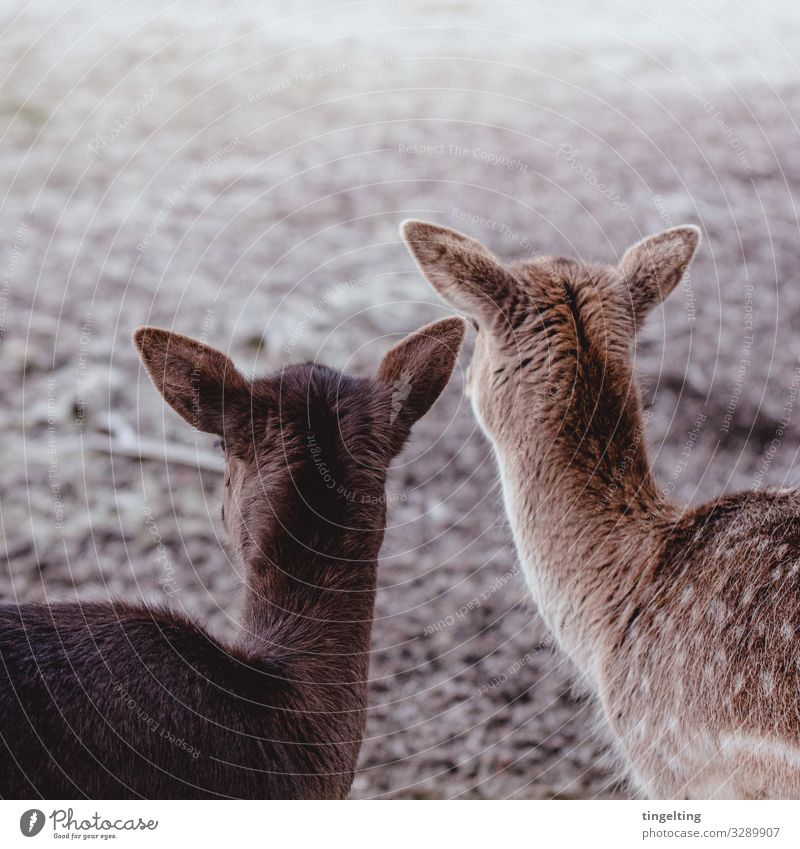 Nature Animal Meadow Together Brown Friendship Field Wild animal Observe Soft Ear Near Spotted Beige Roe deer Back of the head