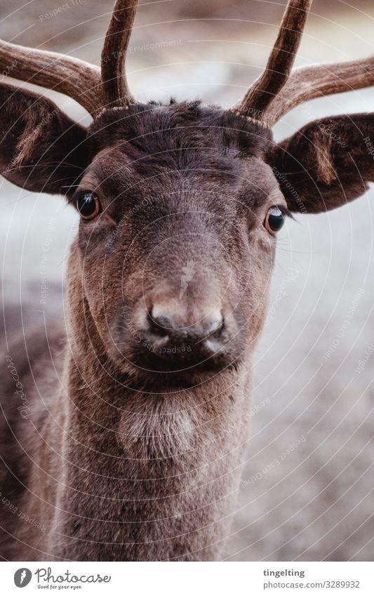 Nature Animal Brown Wild animal Observe Curiosity Near Pelt Deer Love of animals Game park Red deer