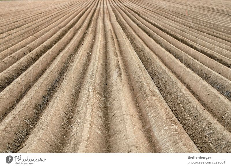 furrow Nature Earth Field Brown Agriculture Arable land Sowing Farmer Farm worker Escape Plow Furrow Cervice Pick Colour photo Exterior shot Detail Abstract